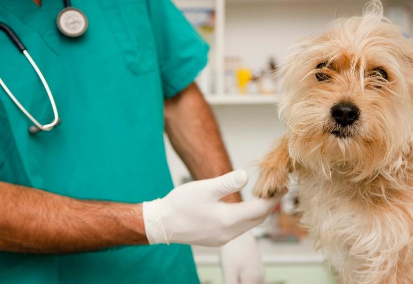 Fue procesada mujer que se hacía pasar por veterinaria